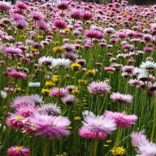 Western Australia Wild Flower Power